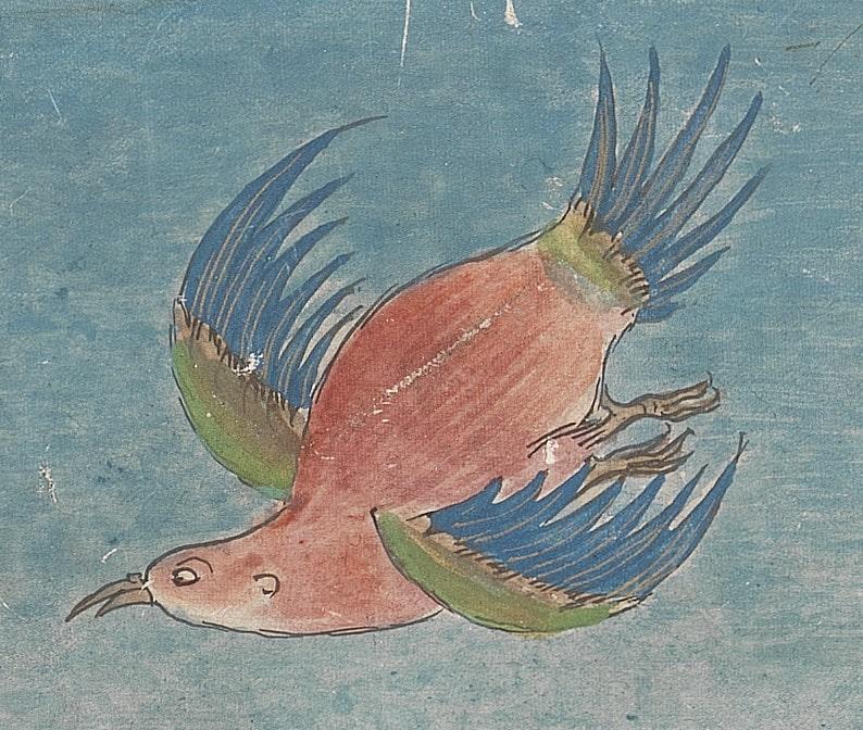 De droom van Ravi - De Droomvogels en het geheime verbond, kindeboek 9-12jr.
